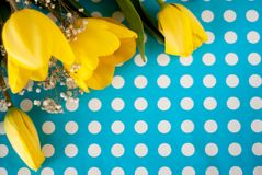 Beautiful spring yellow tulip flowers on blue background royalty free stock photography