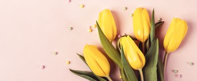 Beautiful spring yellow tulip flowers on pastel pink banner. Holiday mock up stock image