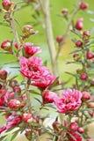 Beautiful springflowers in nature Stock Image