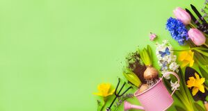 Beautiful springtime background with gardening tools, colorful spring flowers and butterflies. Top view