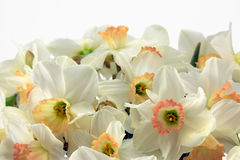 Daffodils. Beautiful springtime daffodils close-up Royalty Free Stock Images