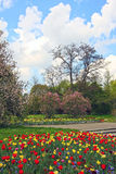 Beautiful springtime landscape with colorful flowerbed Royalty Free Stock Photography