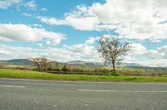 Springtime agricultural scenery in the English countryside. A beautiful springtime scene along the roadside around the English countryside of the United Kingdom Royalty Free Stock Photo