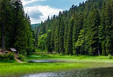 Beautiful spruce forest around the lake. Lovely nature scenery of Synevyr National Park with wooden bridge and alcove. popular travel location of Carpathian Royalty Free Stock Photography