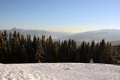 Beautiful spruces covered with snow on the background of sunlit mountains Carpathians Stock Photos
