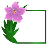 Beautiful square lily flower background Stock Photo