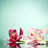 Beautiful square romantic orchid flower background Royalty Free Stock Images
