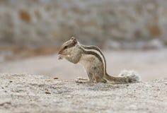 Beautiful Squirrel Stock Photo