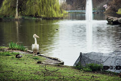 Beautiful St. james's park scene Royalty Free Stock Image
