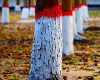 Autumn Trees Stack Natural Background Photograph. The beautiful stack of trees with leaves and colourful decoration natural object stock photograph Royalty Free Stock Image
