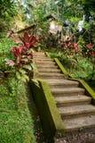 Beautiful stairs in Balinese garden, Bali, Indonesia Stock Image