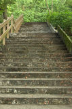 Beautiful stairway in the park Royalty Free Stock Photo
