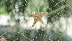 Beautiful starfish in fishing nets swaying in the wind on a background of greenery on a Sunny day. decorative element.  stock video footage
