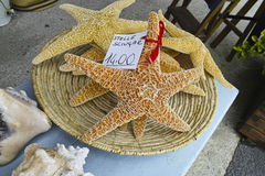 Beautiful starfish at market Stock Images