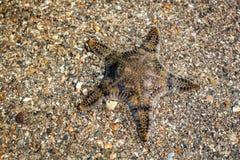 Beautiful starfish on sand Stock Photo