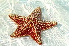 Beautiful starfish Stock Photography