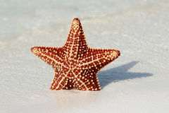 Beautiful starfish Stock Image