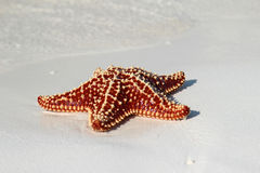 Beautiful starfish Stock Photos