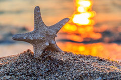 Beautiful starfish in sunrise Stock Photo