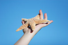 Beautiful starfish in woman's hand Royalty Free Stock Photography