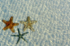 Beautiful starfishes under water Stock Image