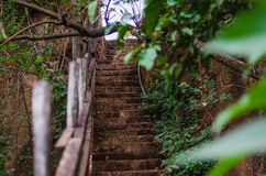 Steps in a forest leading up royalty free stock photography