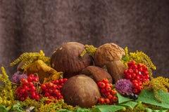 Autumn still life of mushrooms royalty free stock photos