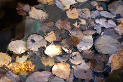 Beautiful still life in soft warm colors with fallen leaves on unmoving water surface top view royalty free stock image