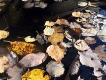 Beautiful still life in soft warm colors with fallen leaves on unmoving water surface top view royalty free stock photos