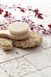 Beautiful still-life for spa with cherry tree flowers. Back brush and loofah glove with cherry blossoms flowers on limestone background for purity, exfoliation stock image