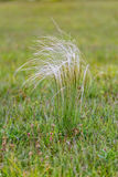Beautiful stipa field in the wind Royalty Free Stock Photography