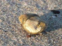 Beautiful stone. On beach sand Royalty Free Stock Photography