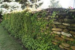 Beautiful stone fence and a vineyard on it. On the photo a beautiful stone fence and a vineyard on it stock image