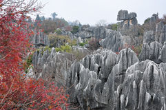 The beautiful stone forest Royalty Free Stock Photos