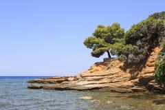 Beautiful stone ledge with a pine. Stock Photo