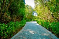 Beautiful stone path surrounding of vegetation in Playacar neighborhood, Playa del Carmen, Mexico.  Stock Image