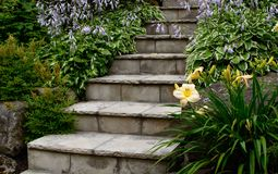 Stairs in garden. Beautiful stone staircase in garden surrounded by blooming flowers on fragrant host as and day lily Royalty Free Stock Photos