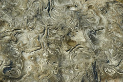 Beautiful stone surface texture Stock Photo