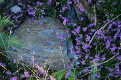 Beautiful Stone Surrounded By Mallow Flowers In Rebedul Meadows In Lugo. Flowers Landscapes Nature. August 18, 2016. Rebedul Becerrea Lugo Galicia Spain Stock Photography