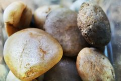 Beautiful stones collected in the caribbean royalty free stock images