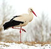 Stork. Beautiful stork at the park outdoors stock image