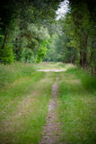 A beautiful straight path Stock Photography