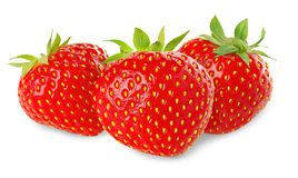 Isolated strawberries stock photos