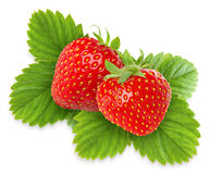 Isolated strawberries royalty free stock image