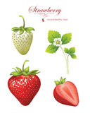 Beautiful strawberries. Illustration of a realistic Stock Photography