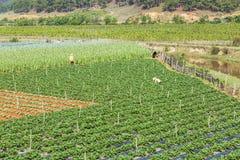 Beautiful strawberry farm stock image