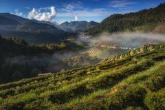 Beautiful strawberry garden and sunrise on Doi Ang Khang , Chiang Mai royalty free stock photos