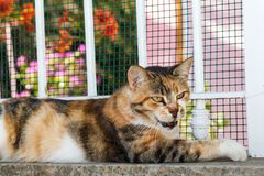 Beautiful stray cat Royalty Free Stock Images