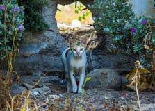 Beautiful stray cat. Walking outdoors Royalty Free Stock Image