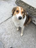Beautiful stray dog Royalty Free Stock Photography